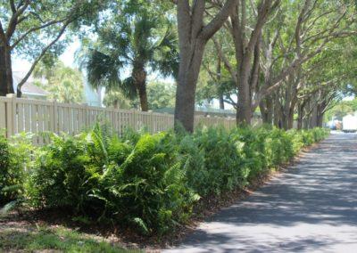 Ferns Heading Toward Crown Drive