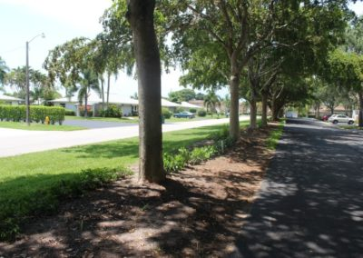 New Hedge along Crown Drive